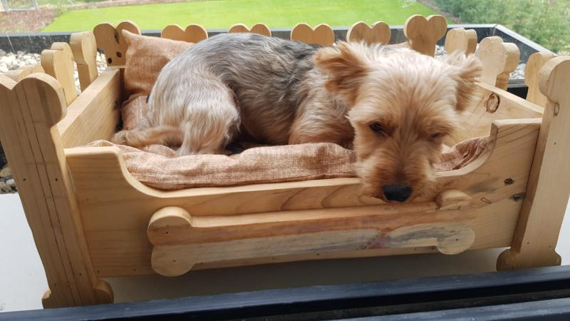 cama con palets para perro
