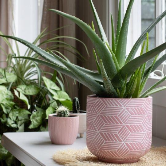 plantas para dormitorio